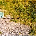 11-snake