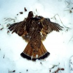 15-ruffed grouse