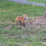 Fox-17