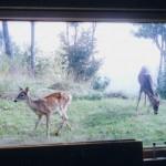 28-deer