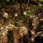 34-beaver logs
