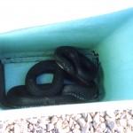 8-snake