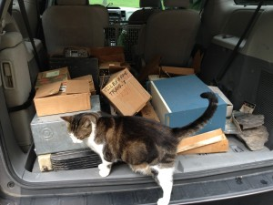 Hmm.. why is the cat so interested in these old boxes?